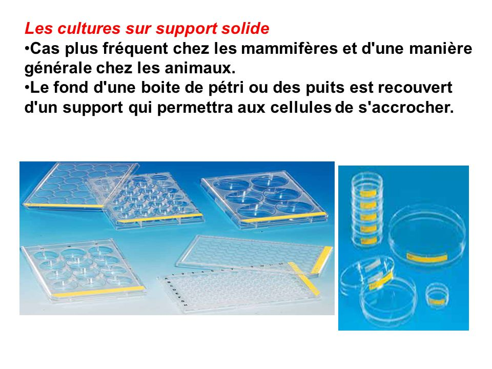 Les cultures sur support solide