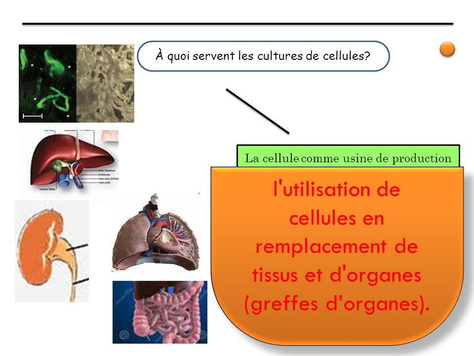 À quoi servent les cultures de cellules