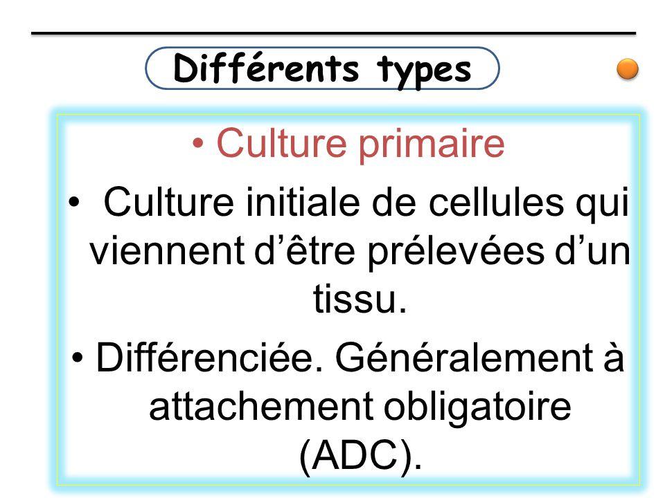 Culture initiale de cellules qui viennent d'être prélevées d'un tissu.