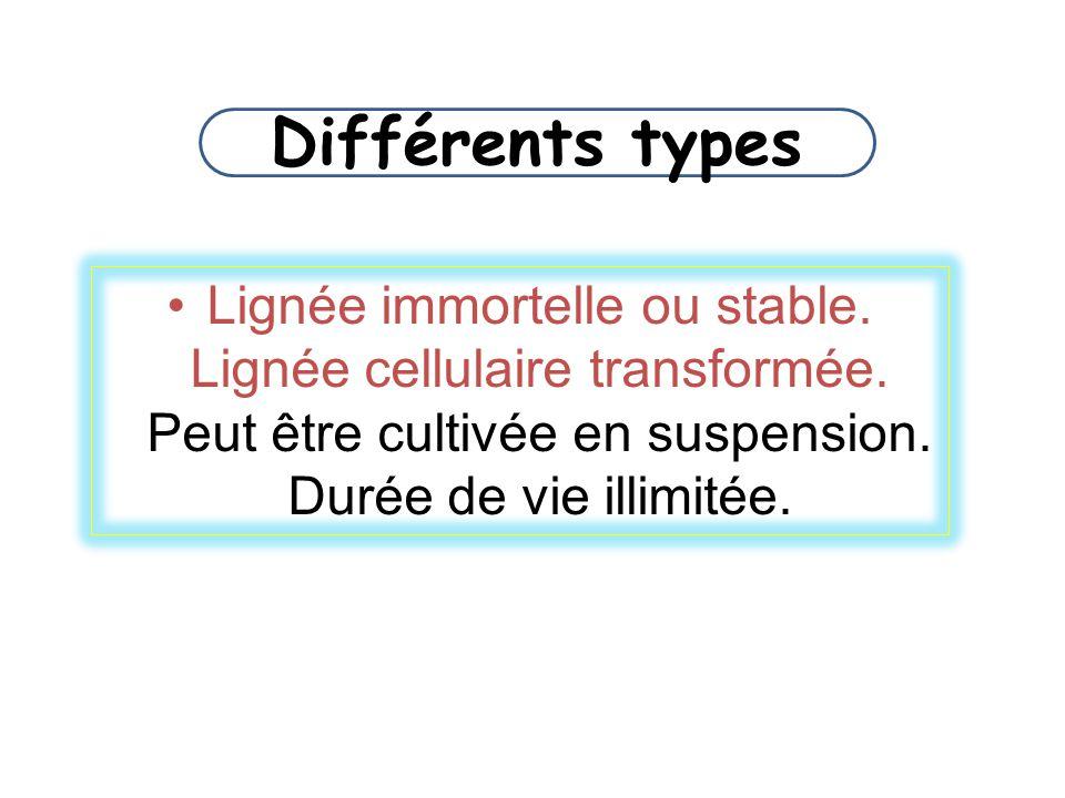Différents types Lignée immortelle ou stable. Lignée cellulaire transformée.