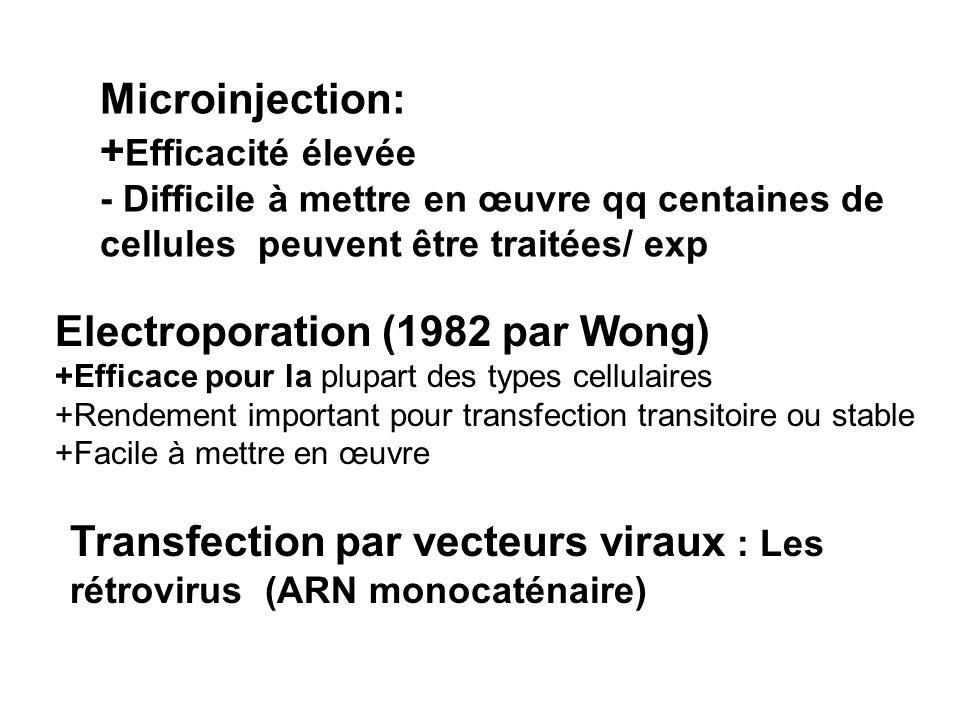Electroporation (1982 par Wong)