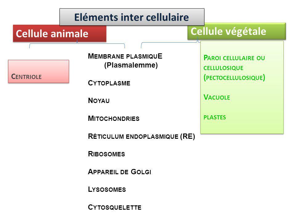 Eléments inter cellulaire