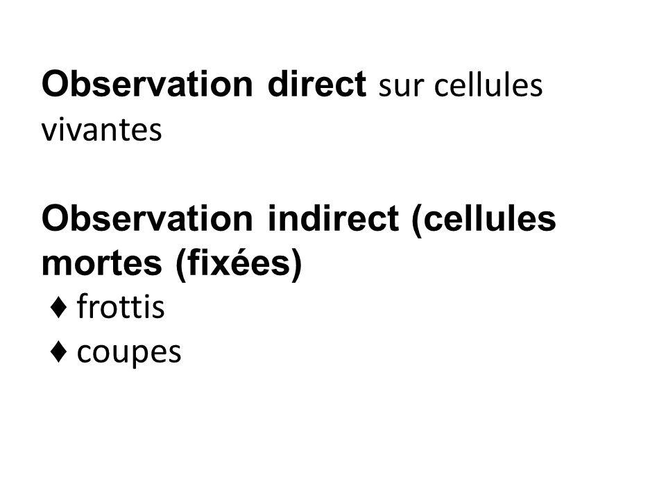 Observation direct sur cellules vivantes