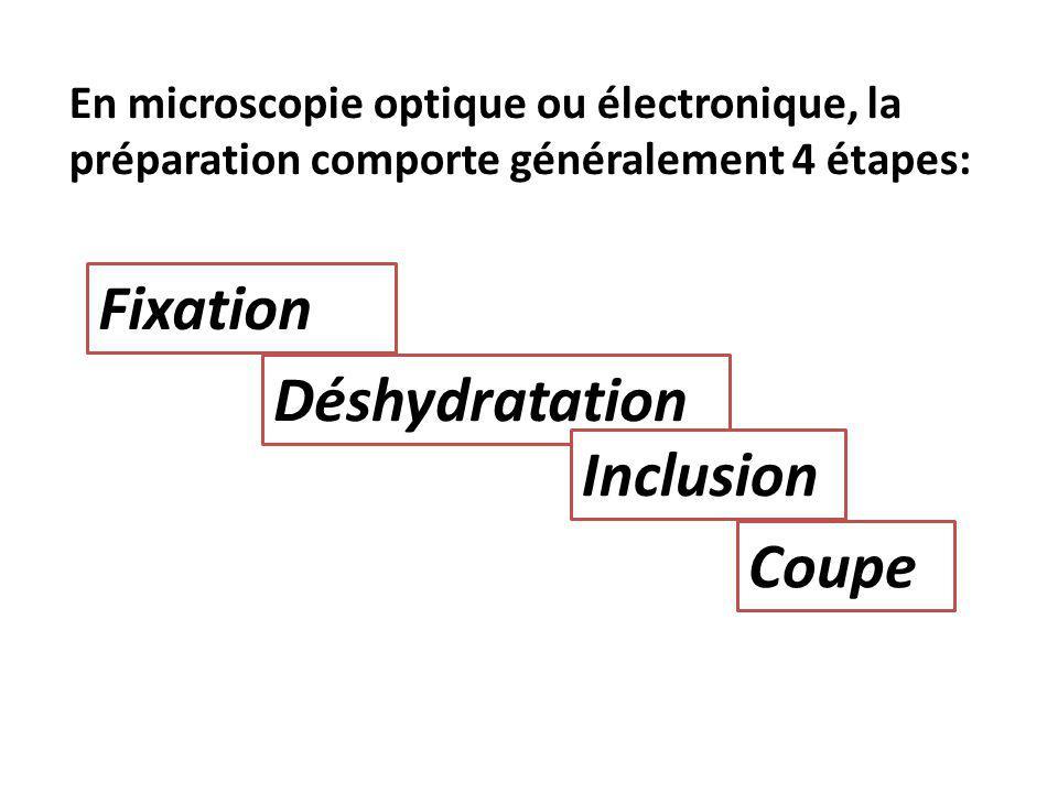 Fixation Déshydratation Inclusion Coupe