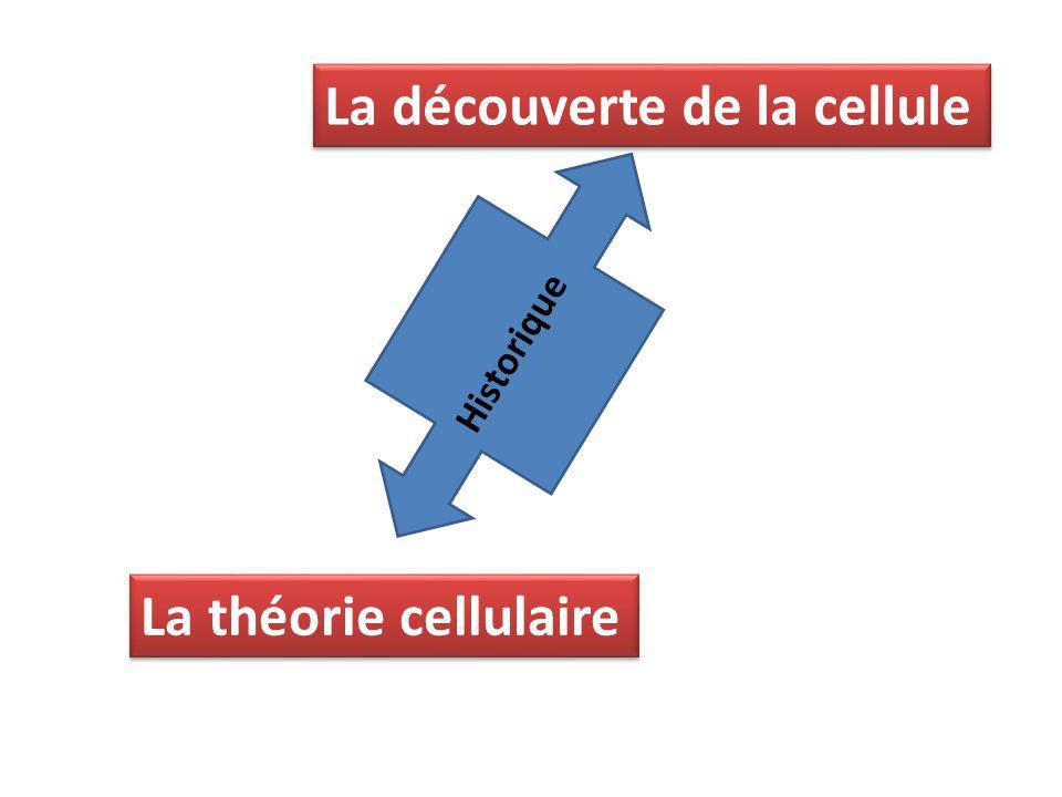 La découverte de la cellule