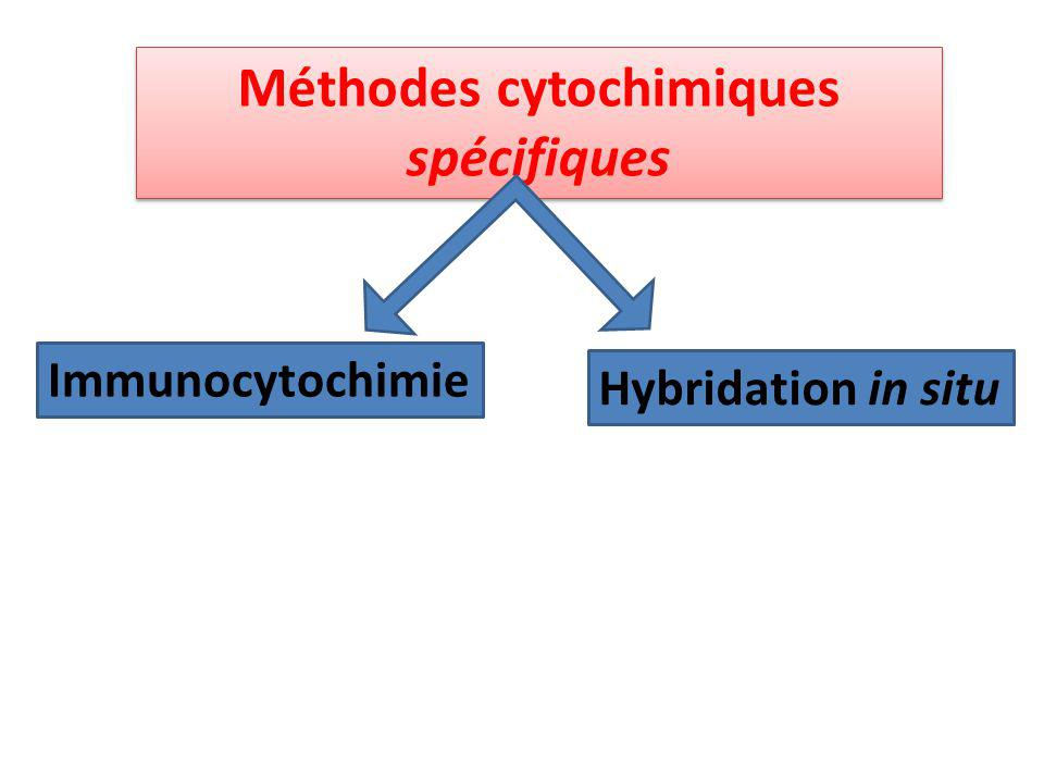 Méthodes cytochimiques