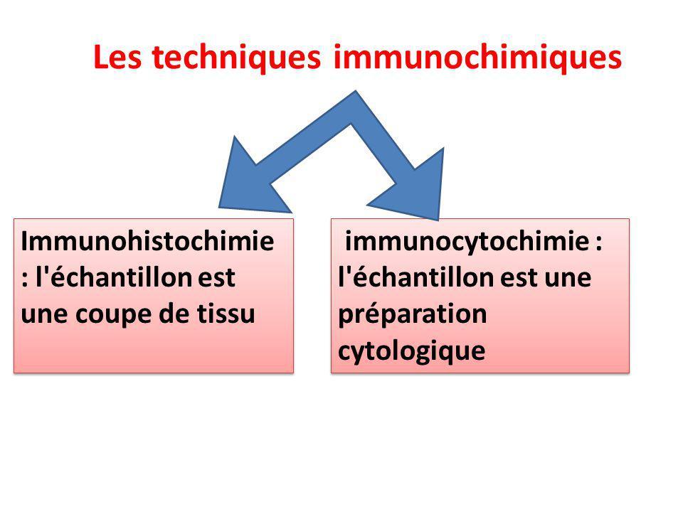 Les techniques immunochimiques