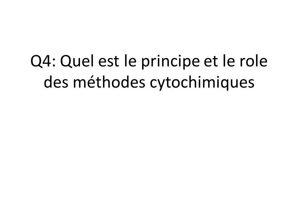 Q4: Quel est le principe et le role des méthodes cytochimiques