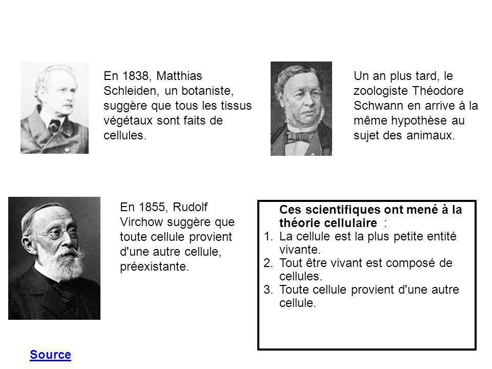 En 1838, Matthias Schleiden, un botaniste, suggère que tous les tissus végétaux sont faits de cellules.