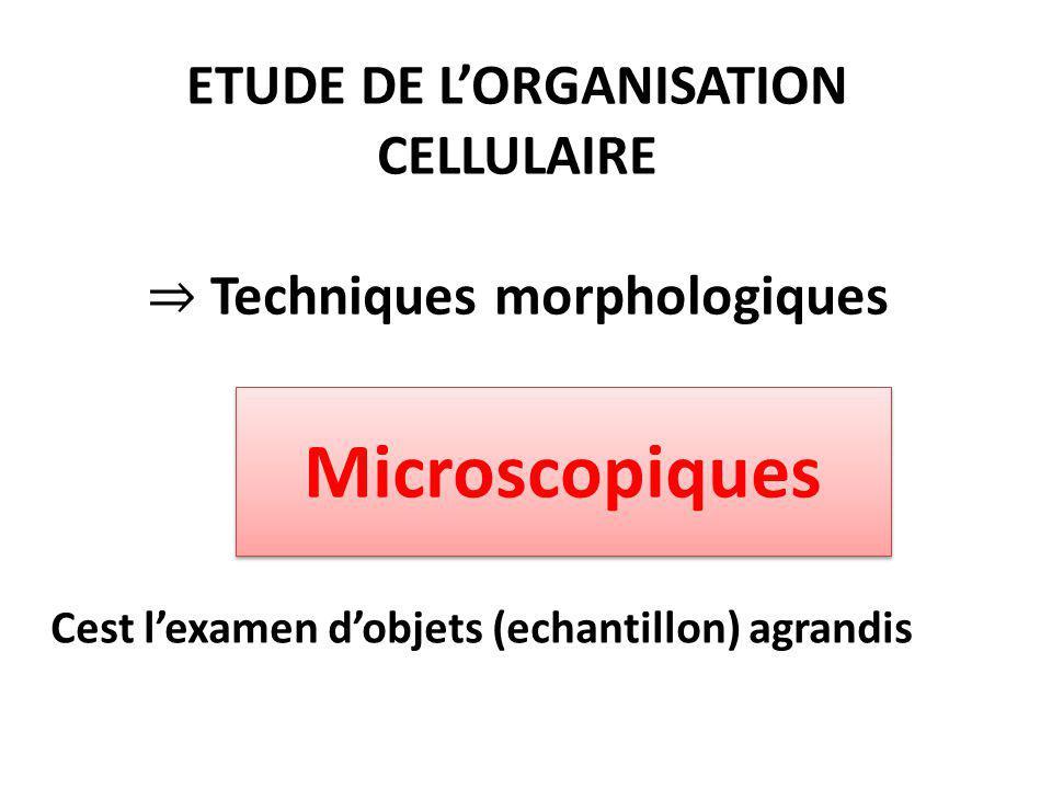 ETUDE DE L'ORGANISATION CELLULAIRE ⇒ Techniques morphologiques