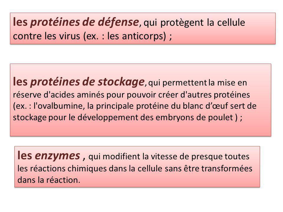 les protéines de défense, qui protègent la cellule contre les virus (ex. : les anticorps) ;
