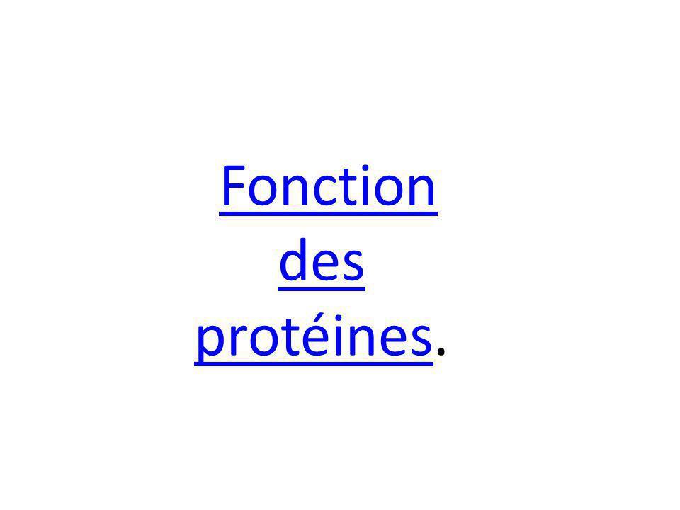 Fonction des protéines.