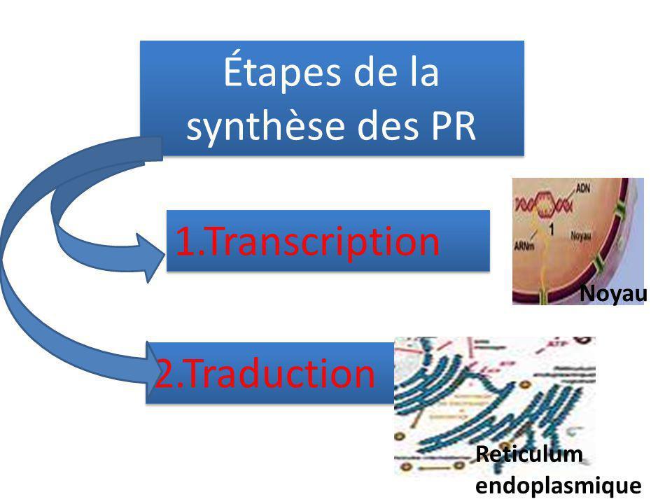 Étapes de la synthèse des PR