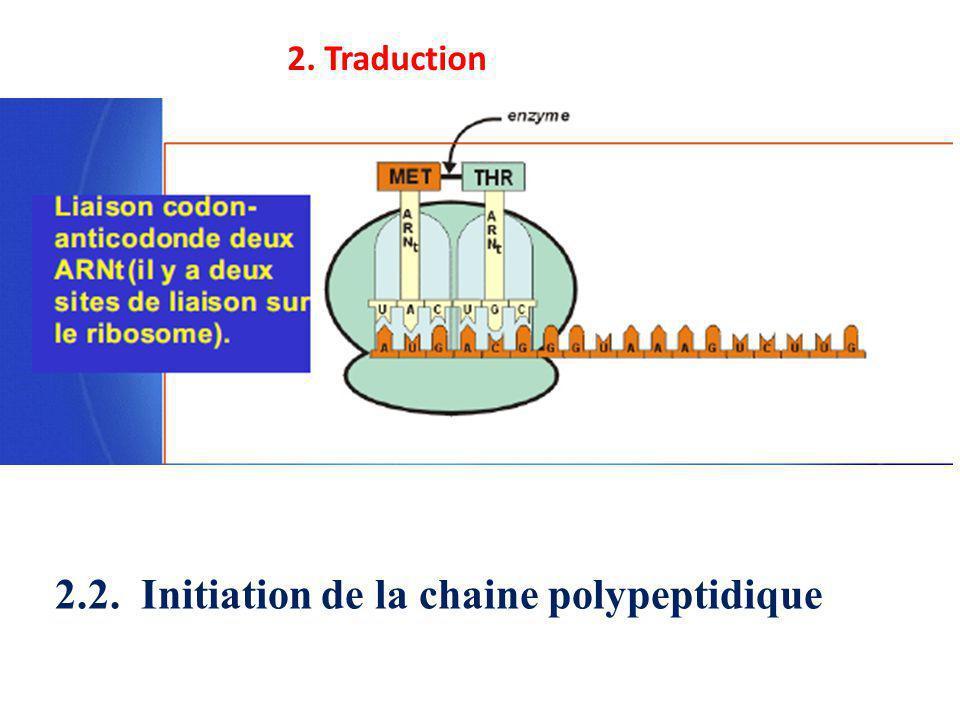 2.2. Initiation de la chaine polypeptidique