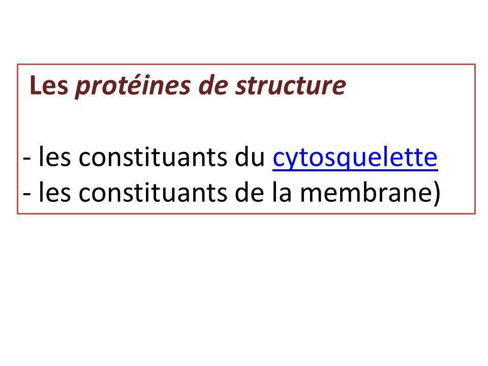 Les protéines de structure