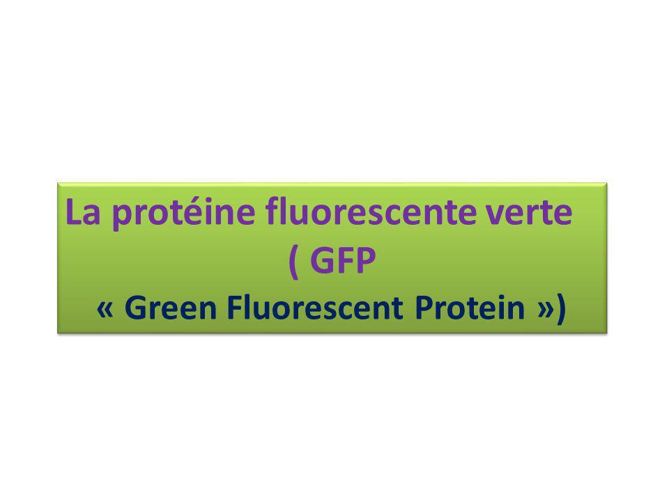 « Green Fluorescent Protein »)