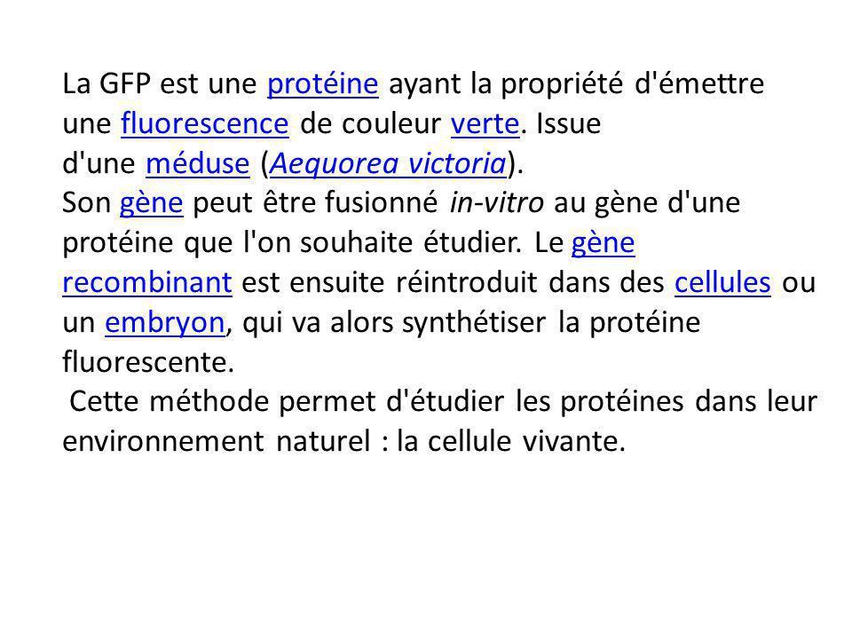 La GFP est une protéine ayant la propriété d émettre une fluorescence de couleur verte. Issue d une méduse (Aequorea victoria).