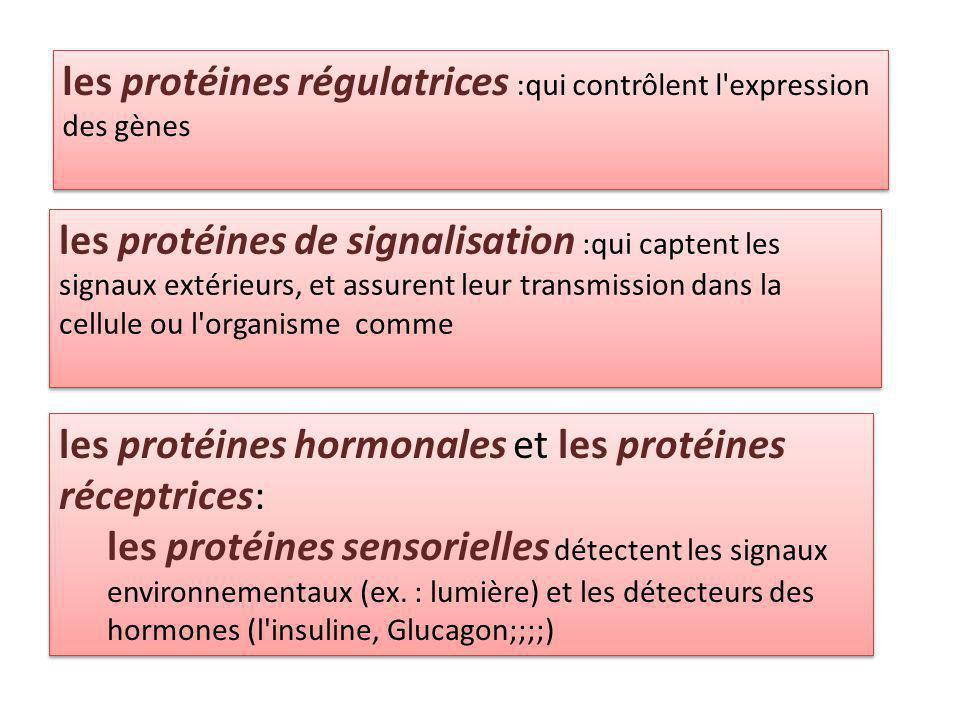 les protéines régulatrices :qui contrôlent l expression des gènes