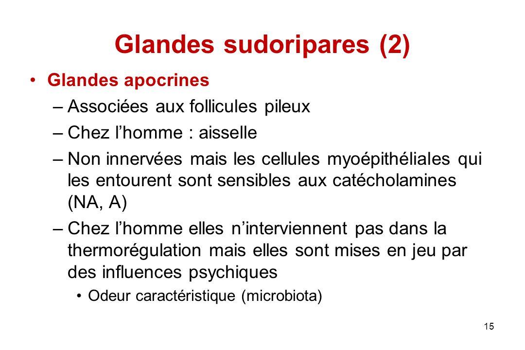 Glandes sudoripares (2)