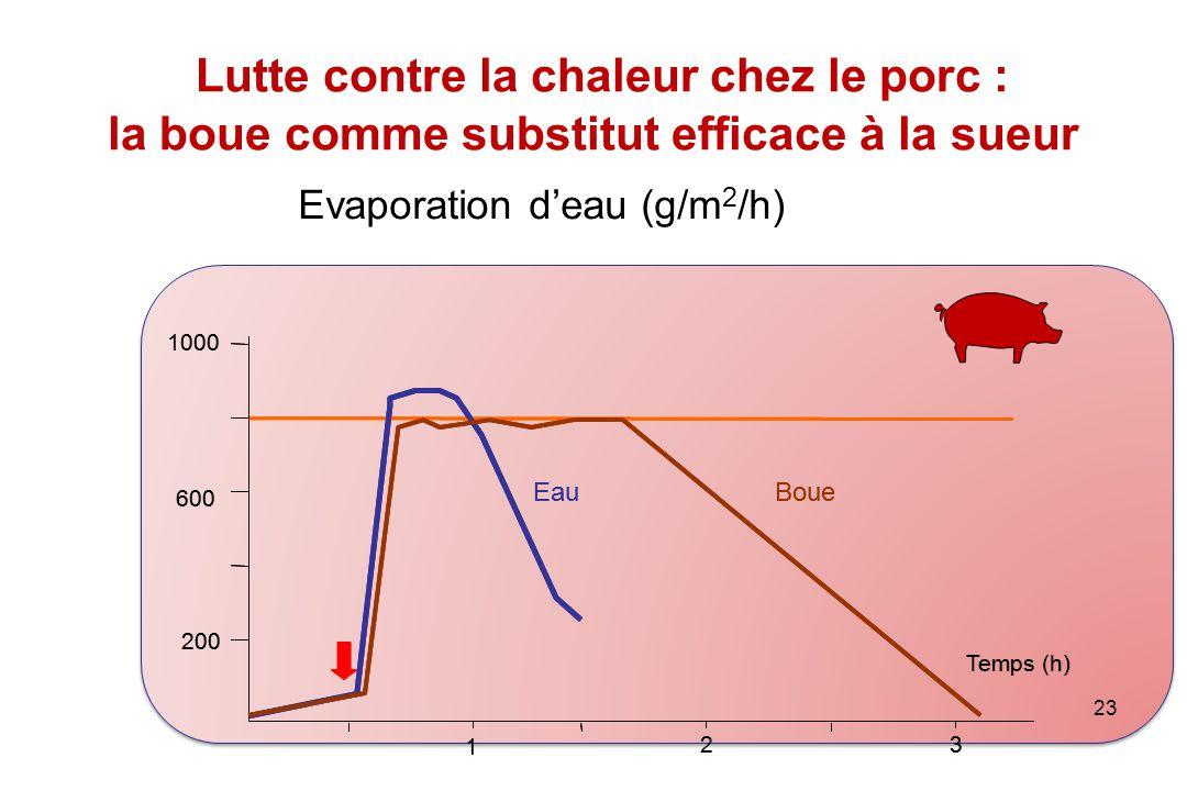 Lutte contre la chaleur chez le porc : la boue comme substitut efficace à la sueur