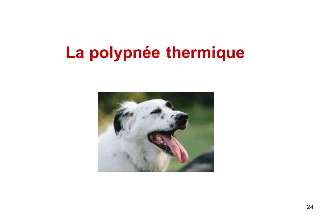 La polypnée thermique