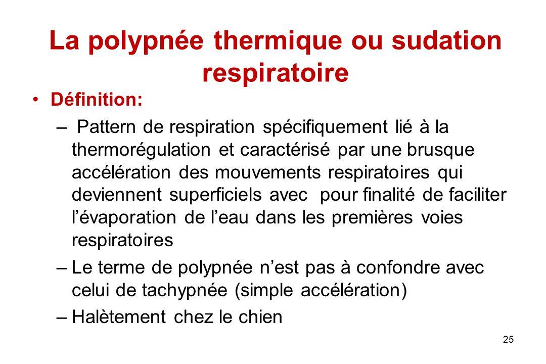 La polypnée thermique ou sudation respiratoire