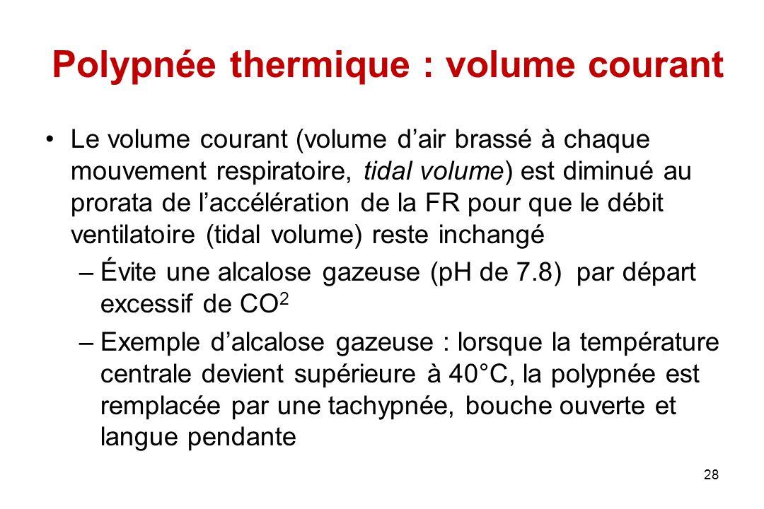 Polypnée thermique : volume courant
