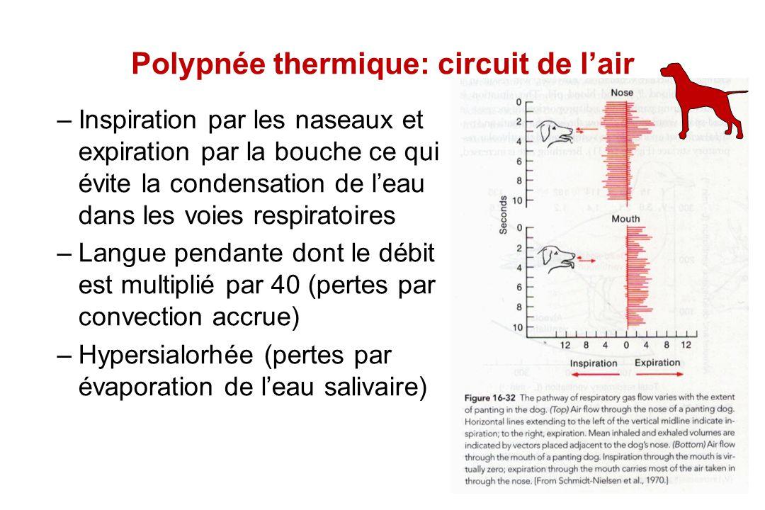 Polypnée thermique: circuit de l'air