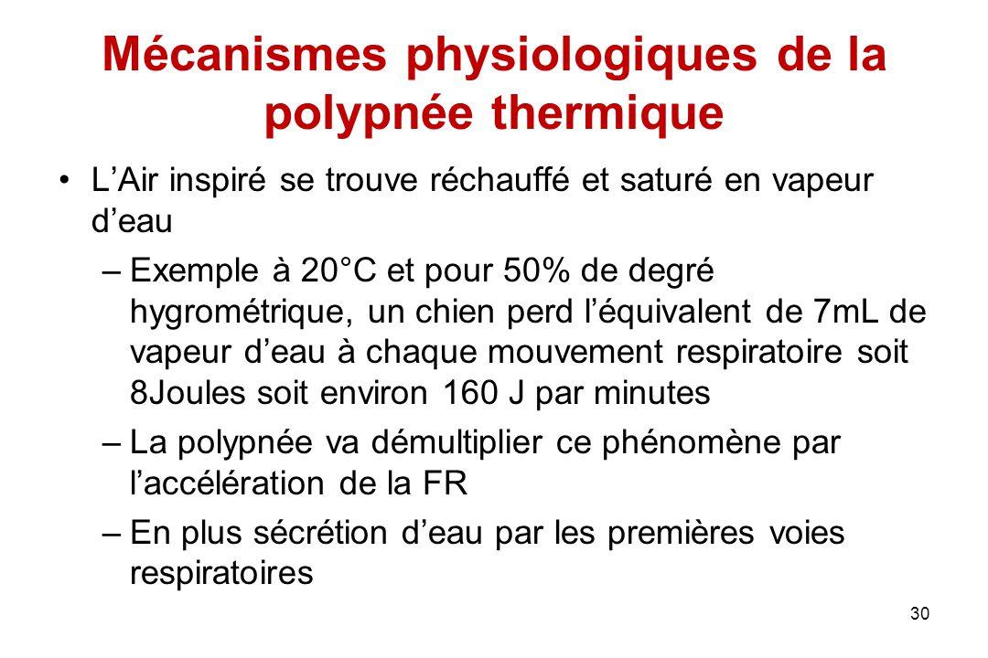Mécanismes physiologiques de la polypnée thermique