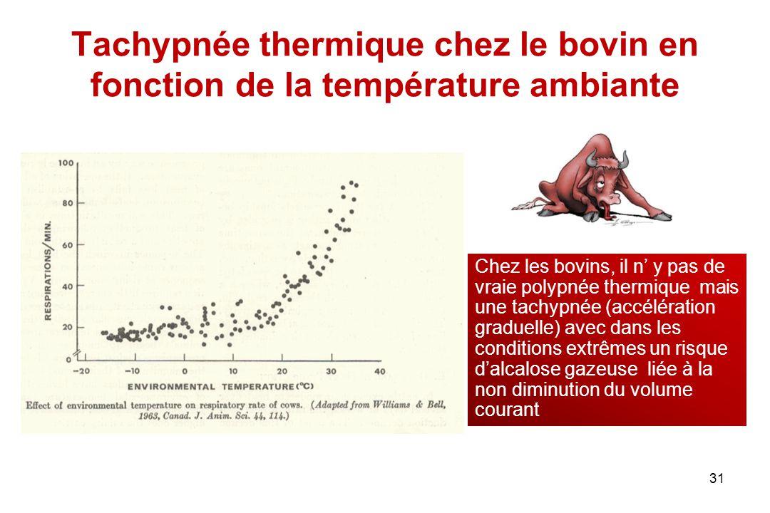 Tachypnée thermique chez le bovin en fonction de la température ambiante