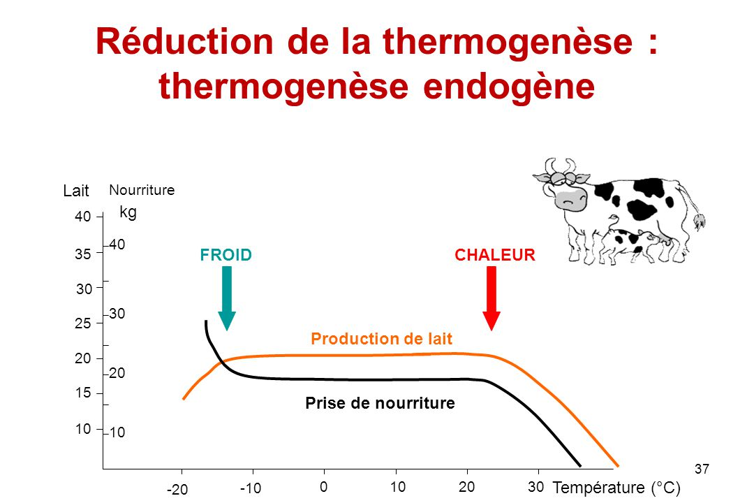 Réduction de la thermogenèse : thermogenèse endogène