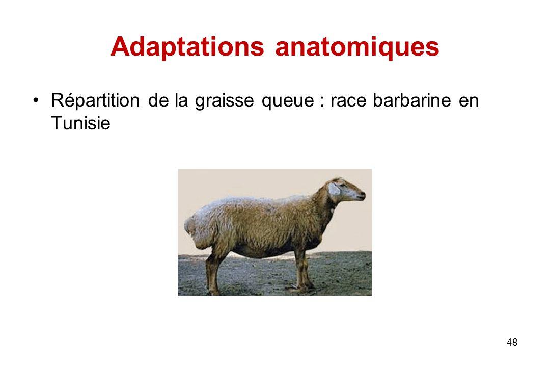 Adaptations anatomiques