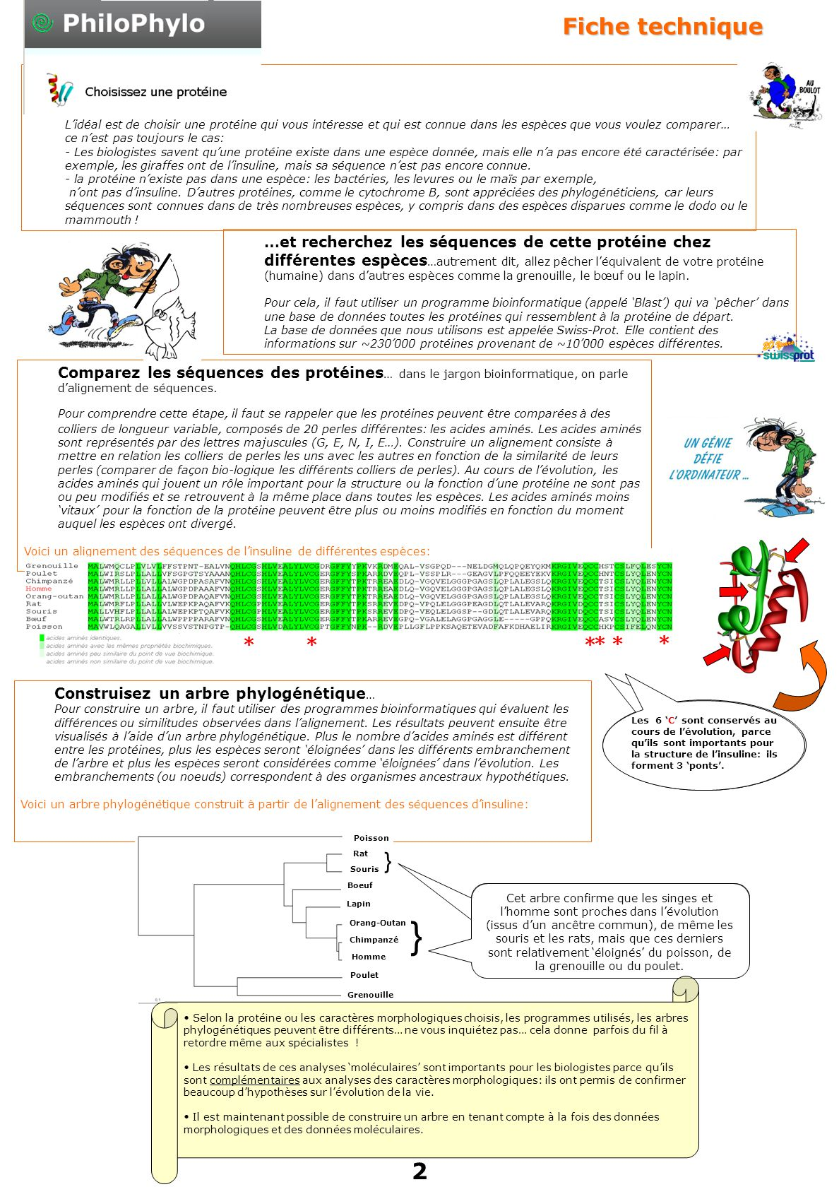 Fiche technique Etape 1. Choisir une protéine…