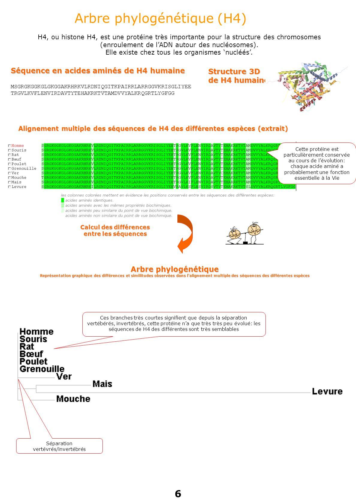 Calcul des différences entre les séquences