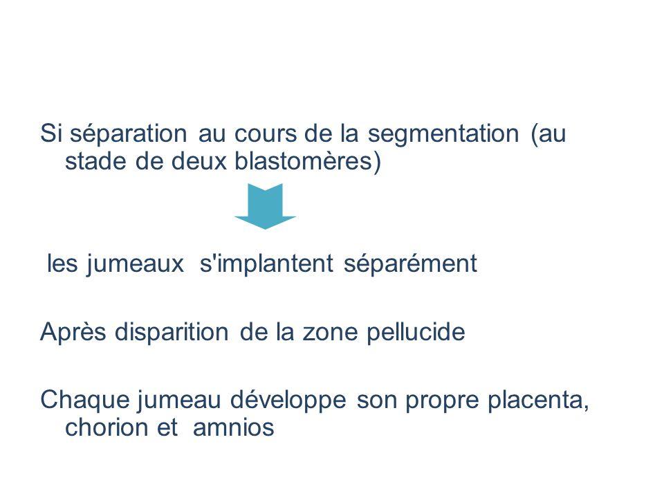 Si séparation au cours de la segmentation (au stade de deux blastomères)