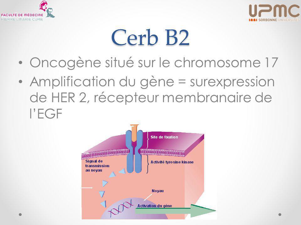 Cerb B2 Oncogène situé sur le chromosome 17