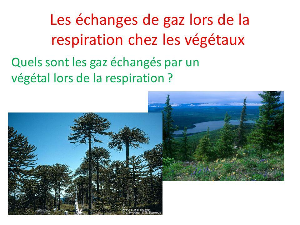 Les échanges de gaz lors de la respiration chez les végétaux