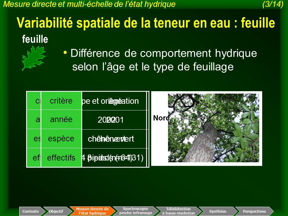 Variabilité spatiale de la teneur en eau : feuille