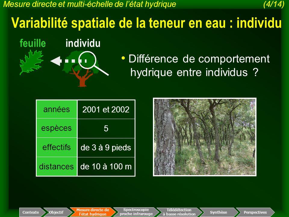 Variabilité spatiale de la teneur en eau : individu
