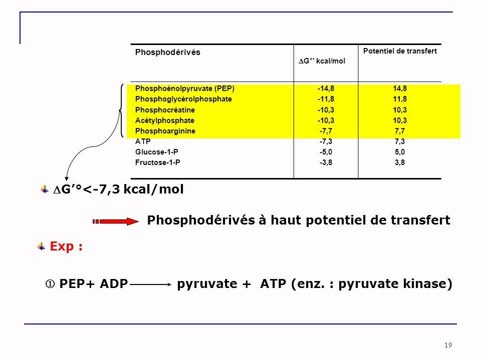Phosphodérivés à haut potentiel de transfert