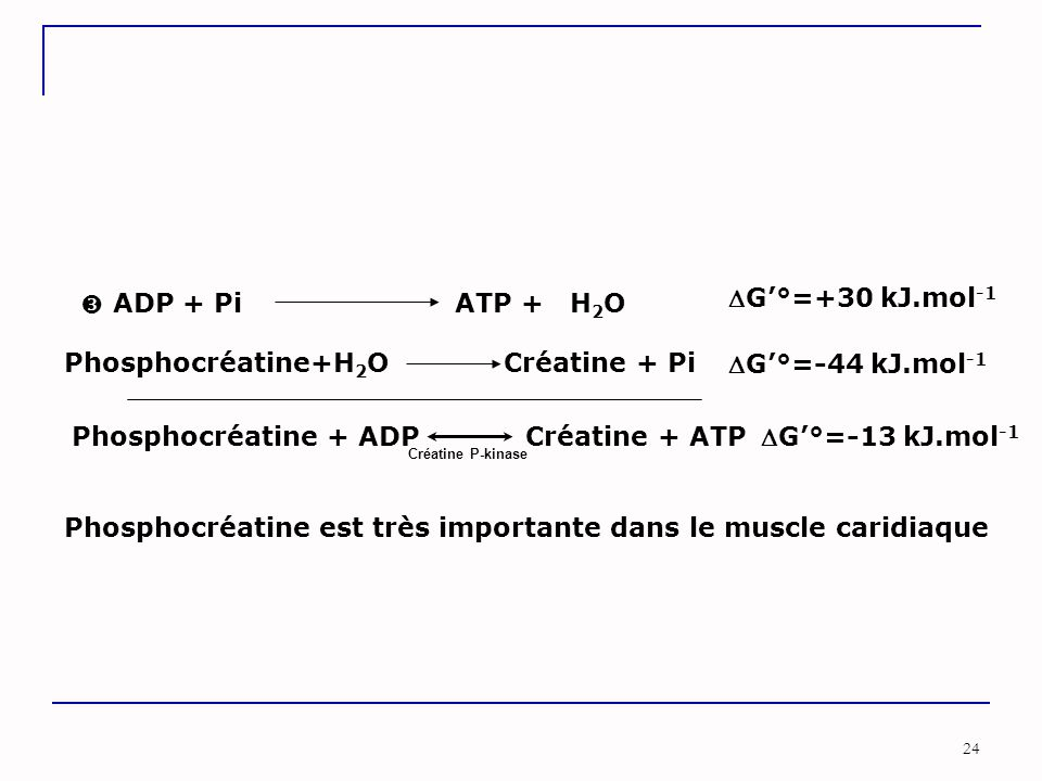 Phosphocréatine+H2O Créatine + Pi G'°=-44 kJ.mol-1
