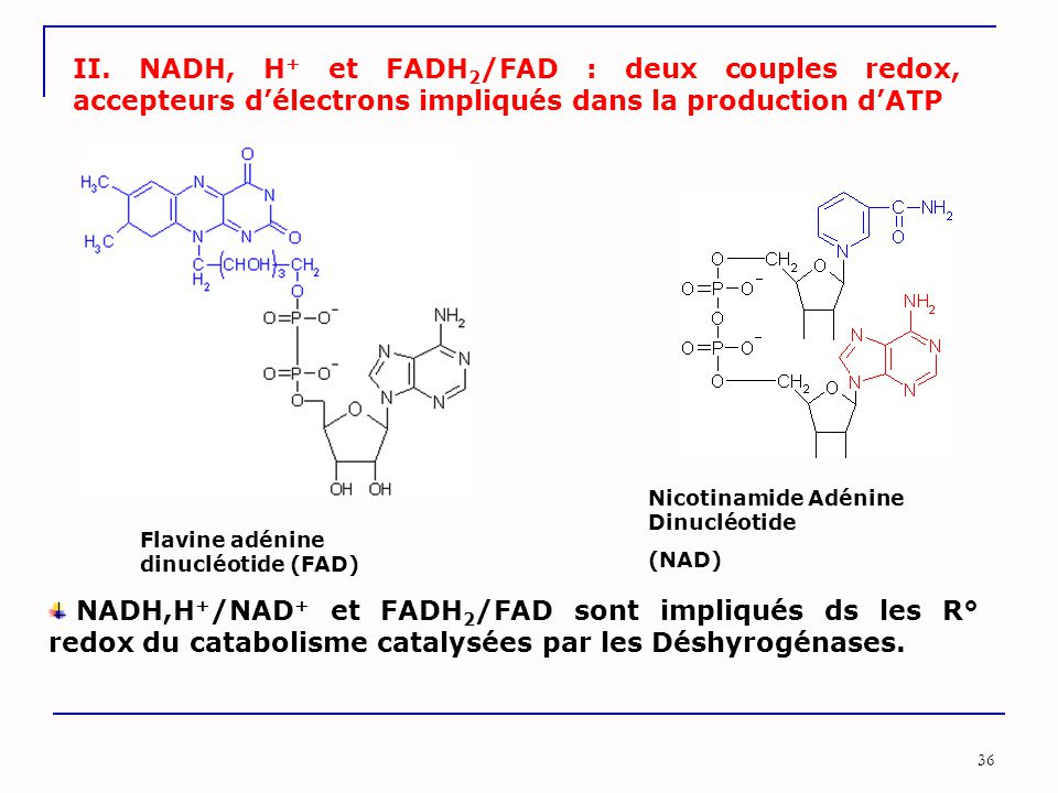 II. NADH, H+ et FADH2/FAD : deux couples redox, accepteurs d'électrons impliqués dans la production d'ATP