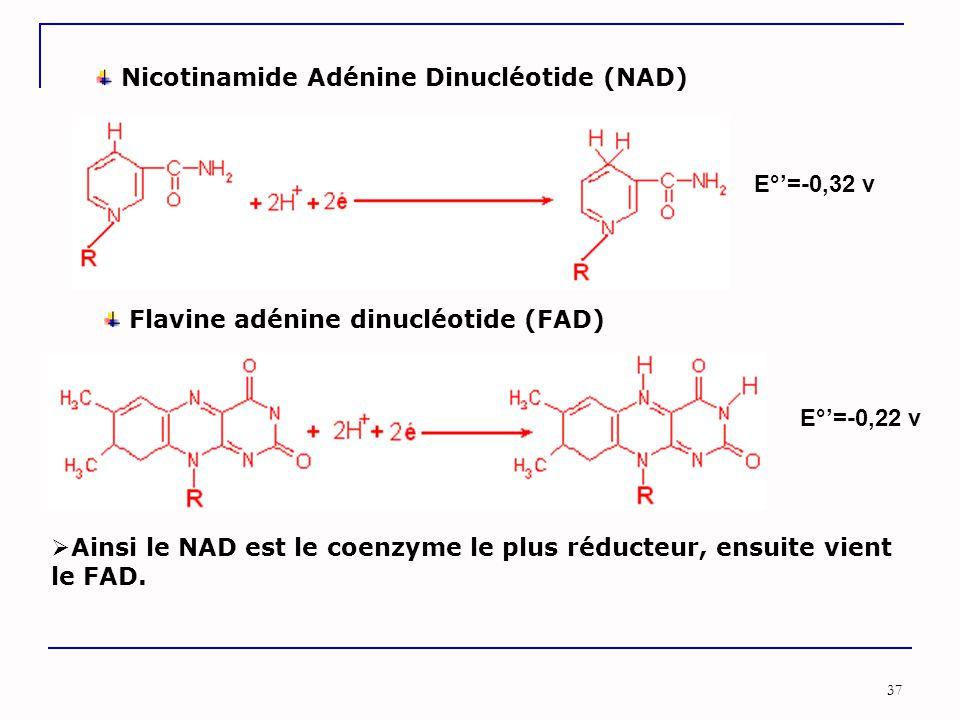 Nicotinamide Adénine Dinucléotide (NAD)