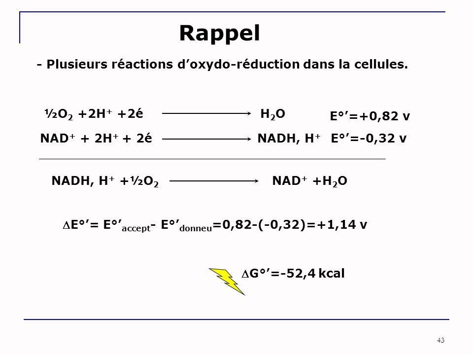 Rappel - Plusieurs réactions d'oxydo-réduction dans la cellules.