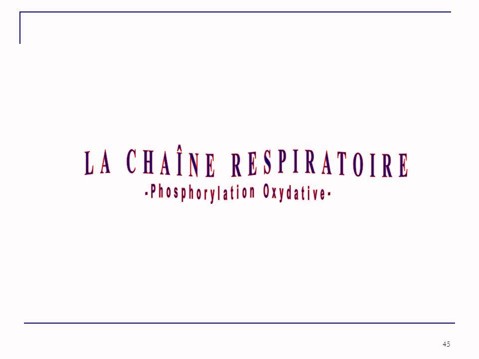 LA CHAÎNE RESPIRATOIRE -Phosphorylation Oxydative-
