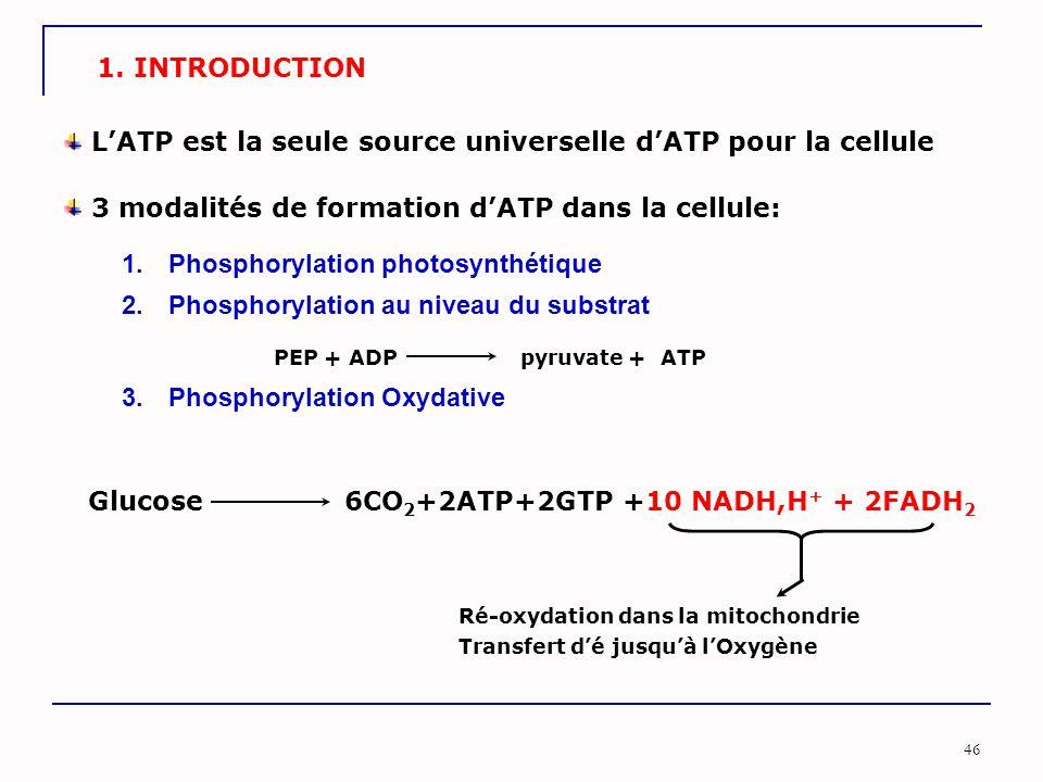 L'ATP est la seule source universelle d'ATP pour la cellule