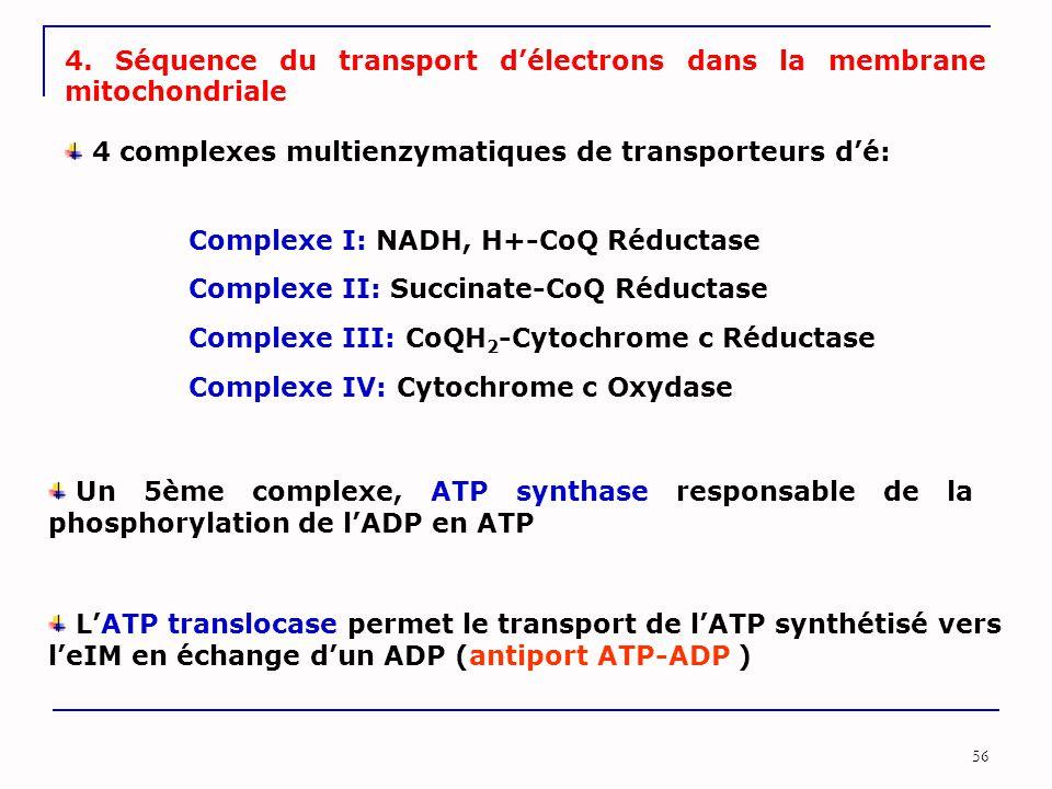 4. Séquence du transport d'électrons dans la membrane mitochondriale