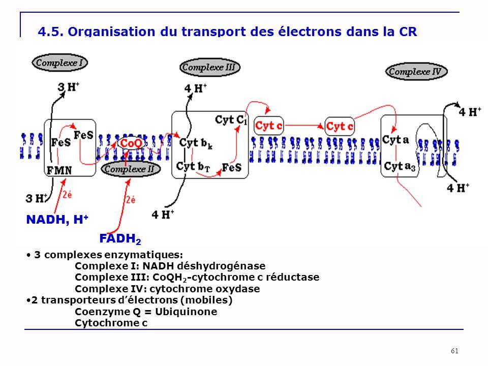 4.5. Organisation du transport des électrons dans la CR