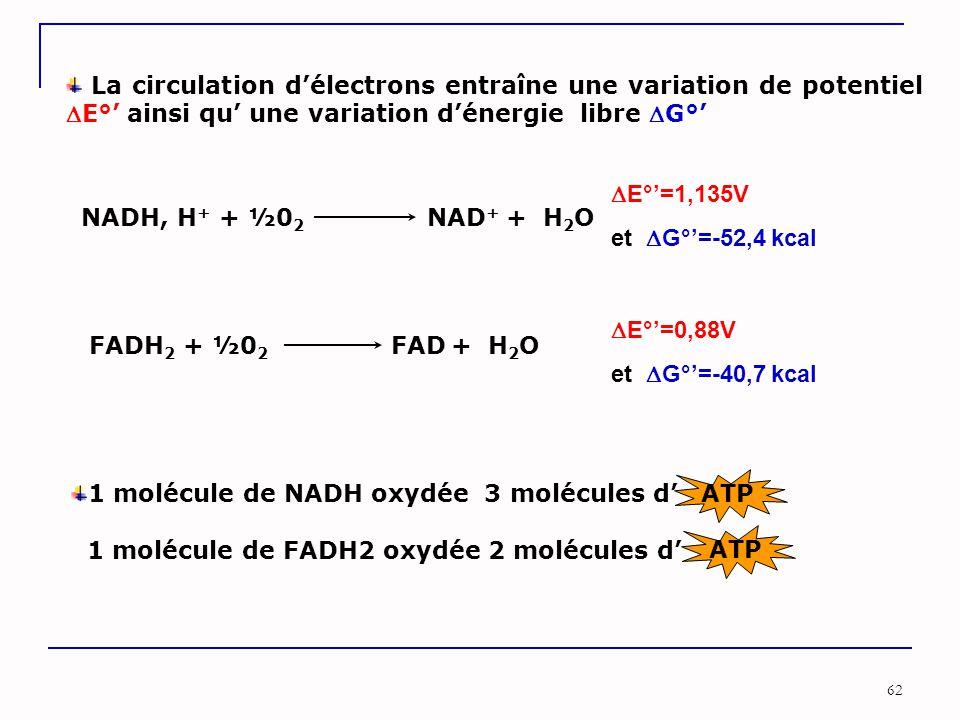 La circulation d'électrons entraîne une variation de potentiel E°' ainsi qu' une variation d'énergie libre G°'