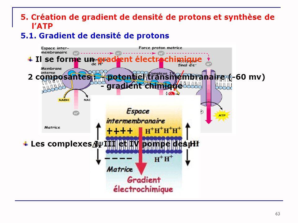 5. Création de gradient de densité de protons et synthèse de l'ATP